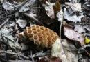 7. 6. 2019 Včelí roj Černá Hora