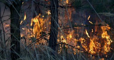 Požár lesního porostu Hluboké Dvory 11. 5. 2021