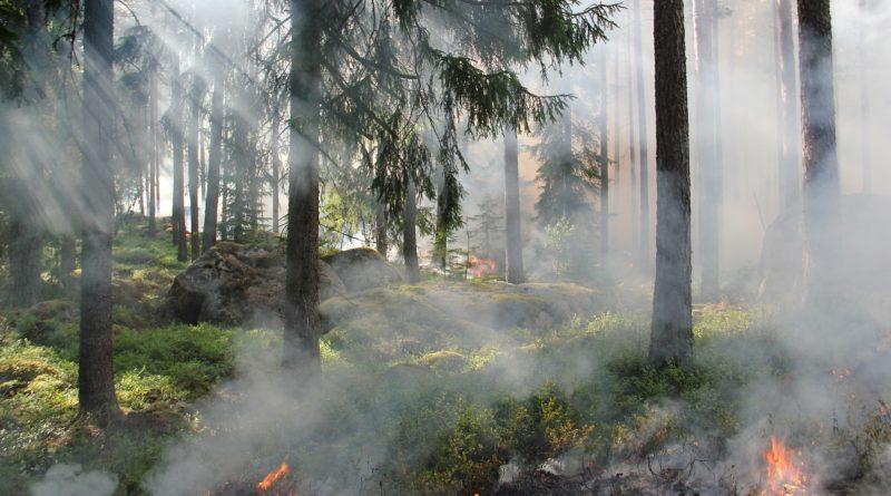 14. 2.  Požár Černá Hora