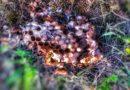 5. 8. 2019 Likvidace obtížného hmyzu – Závist