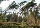 24. 10. 2018 Vyvrácený strom nad vozovkou – Žernovík