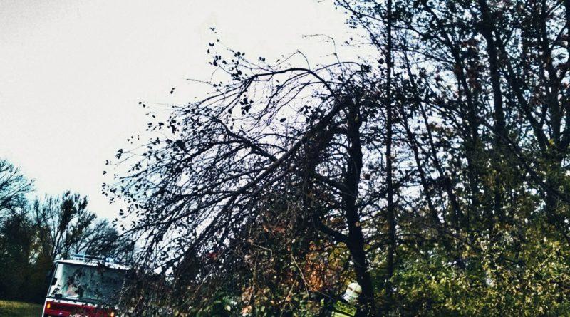 12. 2. 2020 Rozlomený strom Černá Hora
